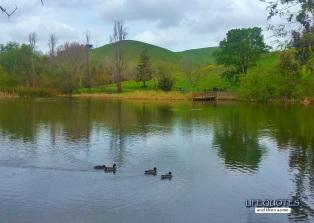 Jordan Pond is home to a few ducks.
